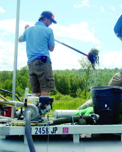 Observer file photo  Last summer, milfoil was removed from Lake Iroquois manually. This summer, a chemical herbicide treatment is planned.