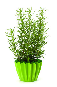 Observer Contributed Photo Herbs, like lavender, can be successfully cultivated indoors.
