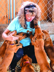 "A ""lick"" of puppies awaits adoption at the dog costume party at Isham's Family Farm on Saturday"